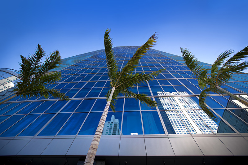 Palm Trees and Building